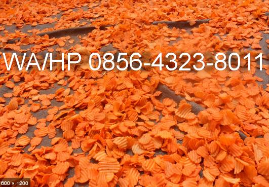puyur orange cap udang