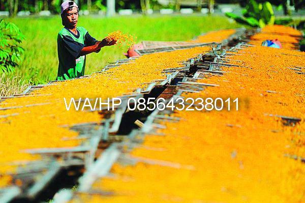 pabrik emping jagung